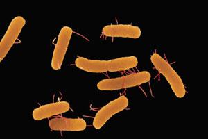 Кишечные бактерии уничтожают рак груди