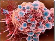 Белок «старения» остановит рак