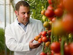 Итальянские помидоры победили рак