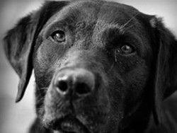 Собаки могут находить рак у людей