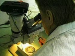 Ученые: клеточная терапия теперь не грозит раком