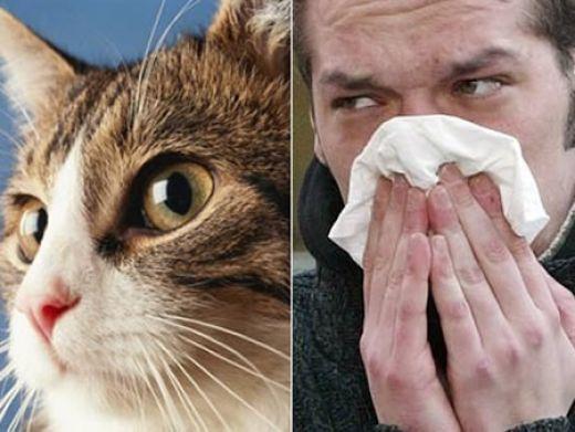 Аллергики значительно реже болеют раком мозга