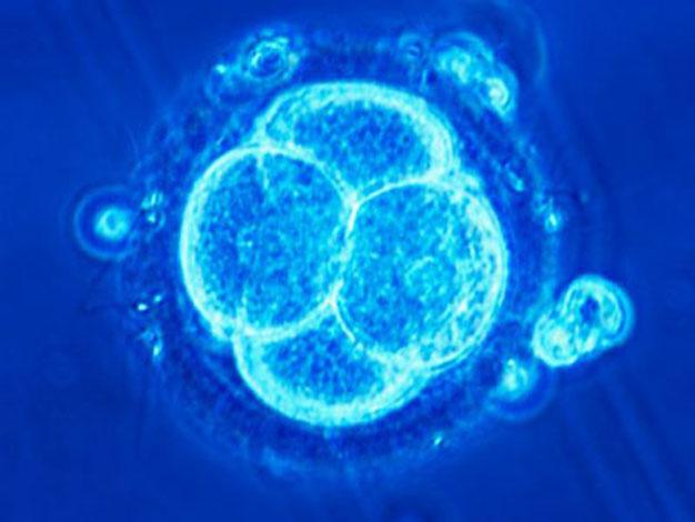 Экстракорпоральное оплодотворение увеличивает риск рака?
