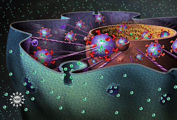 Учеными разрабатываются новые методики профилактики онкологических заболеваний