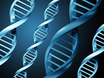 Расшифрованная ДНК помогла иммунной системе победить рак