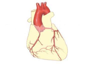 Риск рака простаты связали с ишемической болезнью сердца