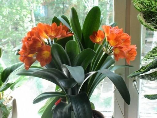 За цветком гузмания здоровье человека