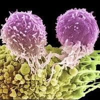 Вирус-шпион поможет справиться с раком
