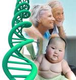 Противораковый ген работает против ожирения и старости