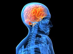 Возможно, человек получил большой мозг в обмен на предрасположенность к раку