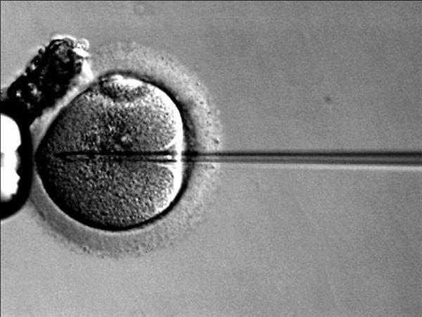kak-vosstanovit-spermatozoidov-posle-himioterapii