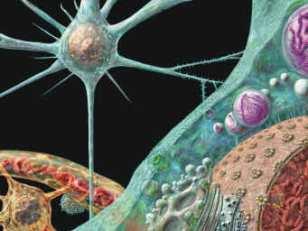 Новое лекарство улучшает выживаемость при рецидиве миеломы