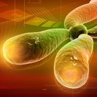 Голодания предупреждает развитие аномалий ДНК и рака