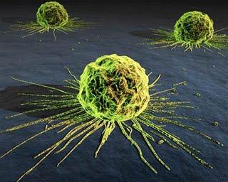 У раковых клеток есть коллективное сознание, утверждают исследователи