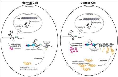 Развитие рака зависит от узлов в мРНК