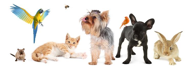 Ветеринарная клиника бутово