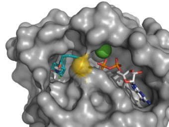У неуязвимого онкогена впервые нашли «ахиллесову пяту»