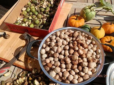 Любые орехи способны снизить риск рака