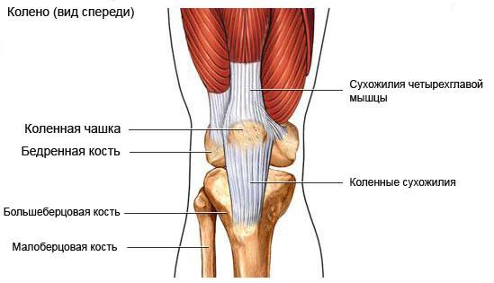 О чем говорит боль в колене?