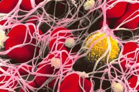 Правда, о лечении стволовыми клетками