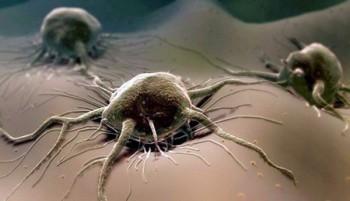 Бытовые мифы о раке