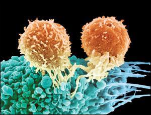 Найдена панацея от онкозаболеваний?