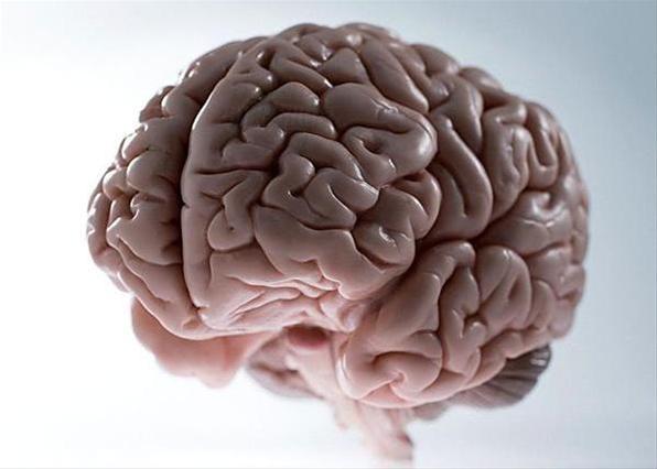 Ученые выяснили, как активировать иммунитет для лечения рака мозга
