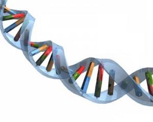 Новосибирским ученым удалось открыть гены, убивающие рак