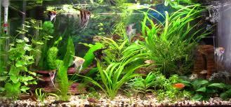 О пользе аквариумных рыбок