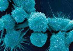 Возрождение простаты после рака – близкая реальность