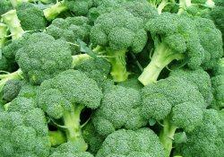 Профилактика рака: «долгоиграющая» брокколи без ГМО и консервантов