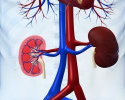 Хроническая болезнь почек как независимый фактор риска развития онкологических заболеваний