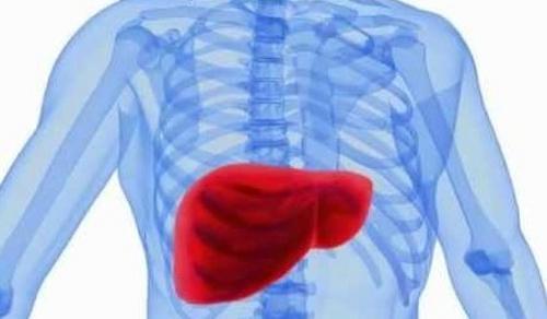 Скрининг больных циррозом на рак печени улучшает результаты терапии гепатоцеллюлярной карциномы