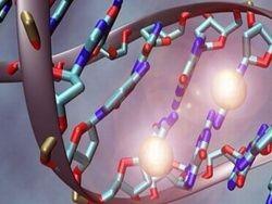 Увеличенные концевые участки хромосом связали с повышенным риском рака мозга
