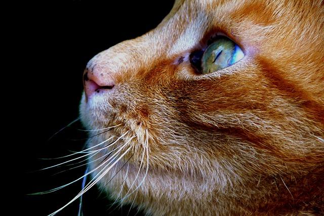 В кошачьем лотке нашли лекарство от рака