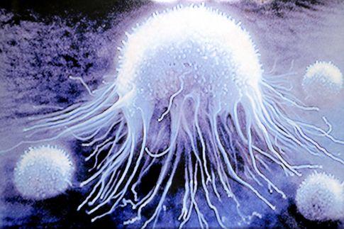 Рак появился одновременно с самыми первыми многоклеточными организмами