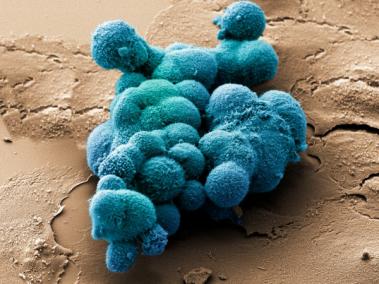 Китайское растение оказалось эффективным средством против рака