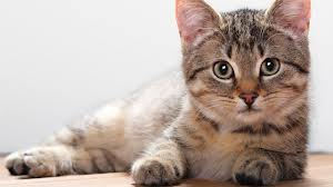 Кошки тоже могут лечить своим «пушистым» лекарством
