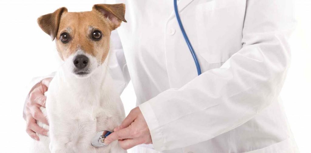 Преимущества вызова ветеринарного врача на дом