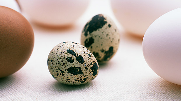 5 полезных свойств перепелиных яиц