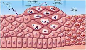 Папилломавирусная инфекция половых органов (ПВИ)