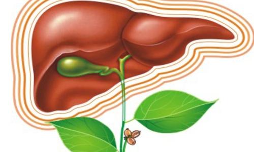 Первичные и вторичные опухолевые поражения печени – специалисты обсудят вопросы диагностики и лечения на Всероссийской научно- практической конференции