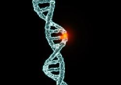 Мутации одних и тех же генов способны вызывать совершенно разные формы рака