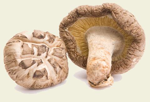 Грибные экстракты для лечения рака печени