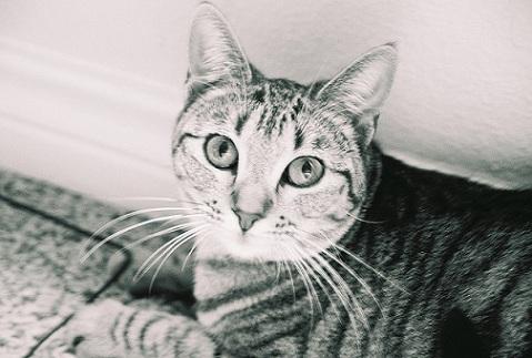 Как распознать лишай у вашего кота и что предпринять
