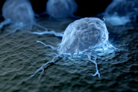 Обнаружены иммунные клетки, способствующие развитию раковых опухолей