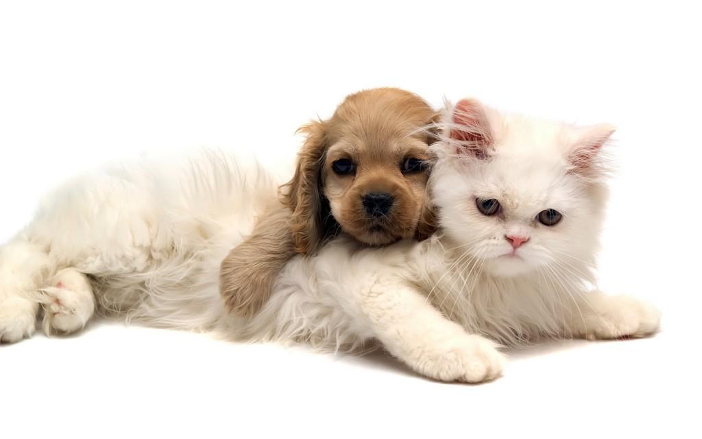 Домашние питомцы. Поговорим о кошках