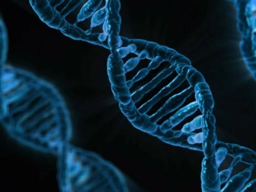 Красное вино и тестостерон защищают от рака: последние открытия ученых, связанные с ДНК
