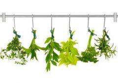 Травы и специи защитят от рака