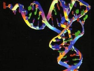 Описано значение микроРНК в регуляции метастазирования